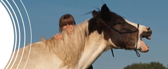 Shiatsu für Pferde Aktuelles