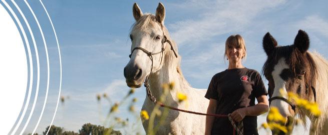 Contact - Shiatsu for horses