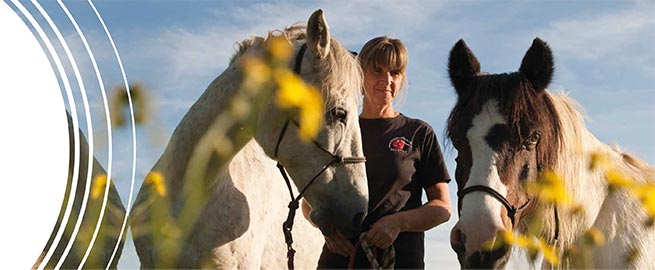 Shiatsu for horses